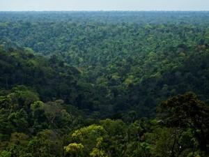Área de floresta na Reserva Natural Vale Linhares (ES) (Foto: Pedro Cattony)