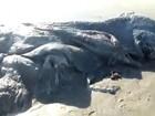 Criatura estranha é achada em praia no México e intriga autoridades