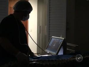 Cobra passou por ultrassom durante a cirurgia (Foto: Reprodução/TV TEM)