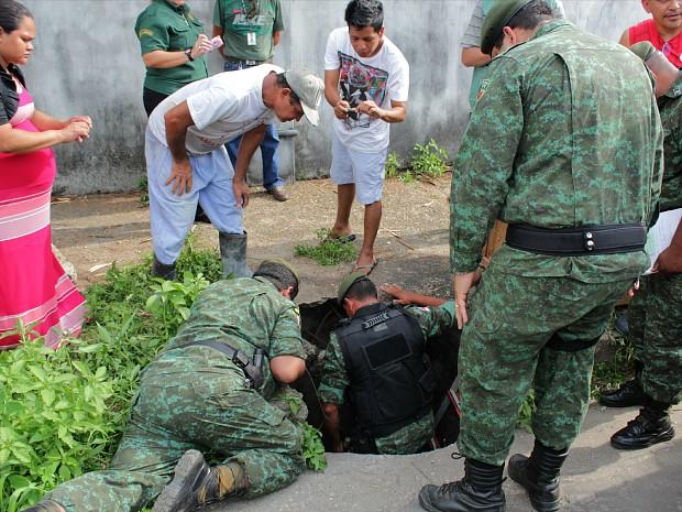 Estudante de 16 anos avistou animal; Batalhão Ambiental fez o resgate. (Foto: Tiago Melo/G1 AM)
