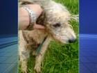 Cão é resgatado em canal do rio Bertioga em Várzea Paulista; vídeo
