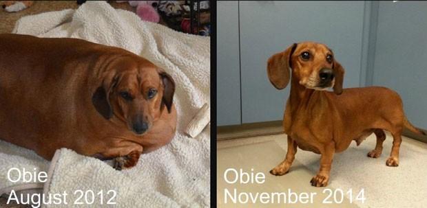 Após perder quase 25 quilos, cão Obie é atração de calendário (Foto: Reprodução/Facebook/Obie Dog Journey)