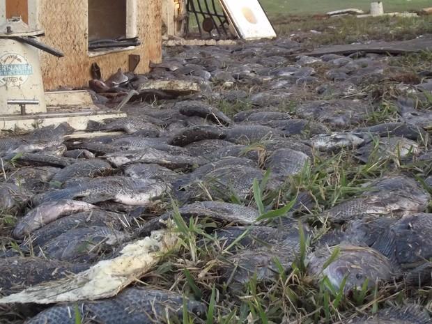 Caminhão carregado com peixes tomba em rodovia de Cordeirópolis (Foto: Reprodução/EPTV)