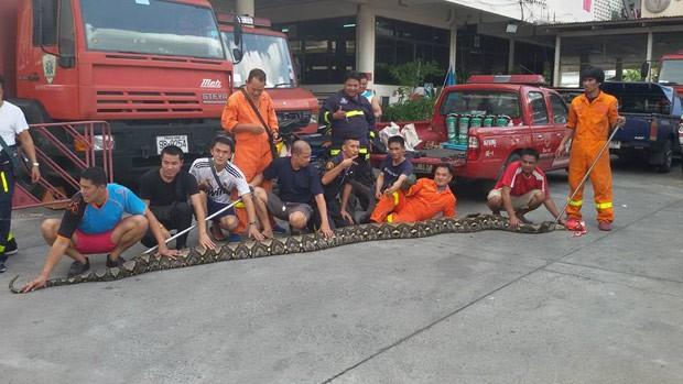 Píton foi capturada em Thonburi, região da capital Bangcoc (Foto: Reprodução/Facebook/Bombeiros de Talat Phlu)