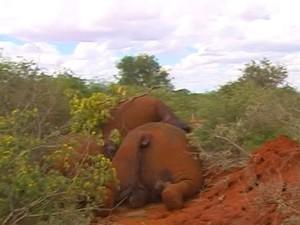 Elefantes mortos na África (Foto: BBC)