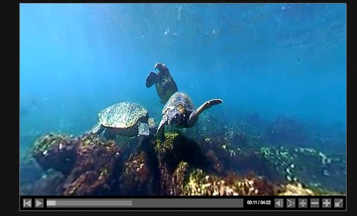 Vídeo capturado em 360 graus pelo aparelho debaixo dágua (Foto: Reprodução/Eye-Mirror)