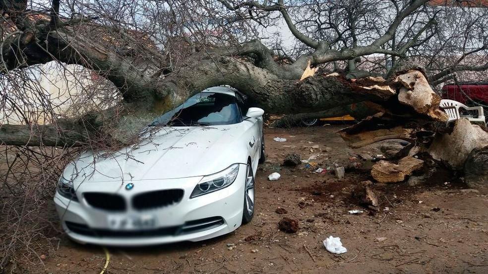 BMW atingida por árvore de grande porte na região norte da Bahia (Foto: José Augusto/Blog Augusto Urgente)