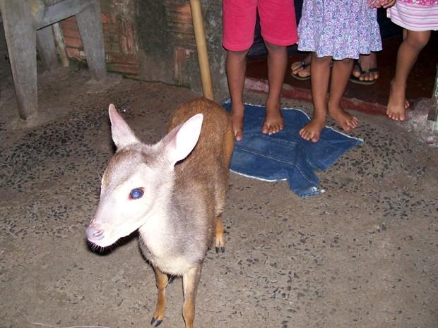 Dono da casa disse que presença do animal alegrou as crianças na noite de sexta (Foto: Divulgação)