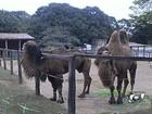 Agência de Meio Ambiente confirma morte de camelo no Zoo de Goiânia