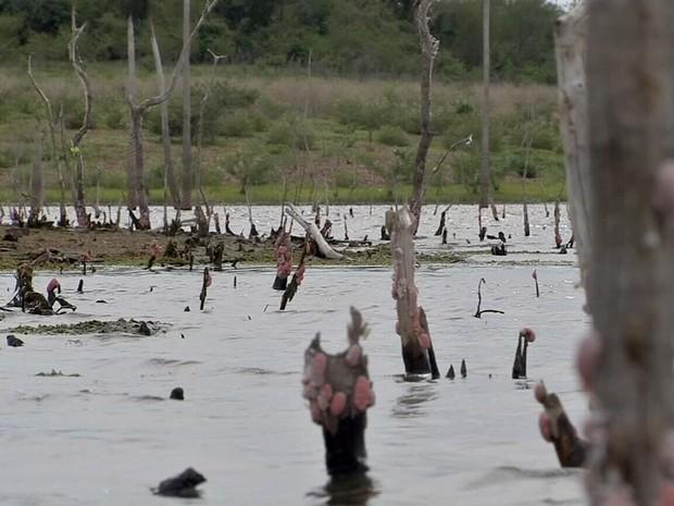 Há três anos, açude Carnaubal já anunciava um futuro racionamento; atualmente, está completamente seco (Foto: TV Verdes Mares/Reprodução)