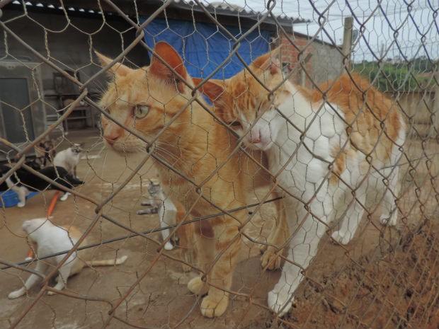 Abrigo enfrenta o constante abandono de animais na porta do local (Foto: Ivana Santana/G1)