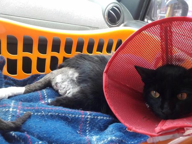 Shiva, a gata da Ipiranga, como foi batizada, se recupera após agressões (Foto: Luciana Bergara/ Arquivo pessoal)