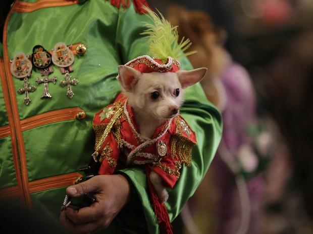 Pet desfila na semana de moda para animais de estimação, em Nova York (Foto: AFP PHOTO / JOSHUA LOTT)