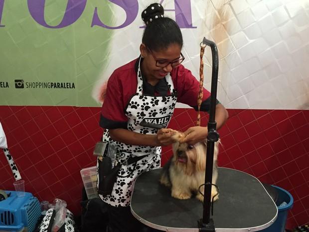 Animais ganharam novos cortes em competição de Salvador (Foto: Giana Mattiazzi/ TV Bahia)
