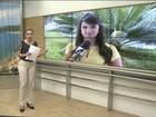 Febre amarela é investigada em seis casos no ES