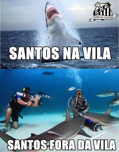 Santos tubarão