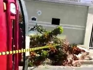 Caminhão bateu em árvore e tombou em Campinas (Foto: Edson Ferreira da Silva / Arquivo pessoal)