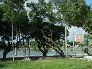 Árvores do Parque Solon de Lucena em João Pessoa, Paraíba (Foto: Renata Vasconcellos/Globoesporte.com)