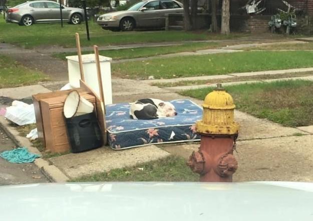 Boo espera sobre um colchão, também jogado fora
