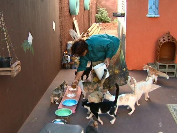 Moradora de Araraquara adota 18 gatos em sete anos (Foto: Rodrigo Sargaço/EPTV)