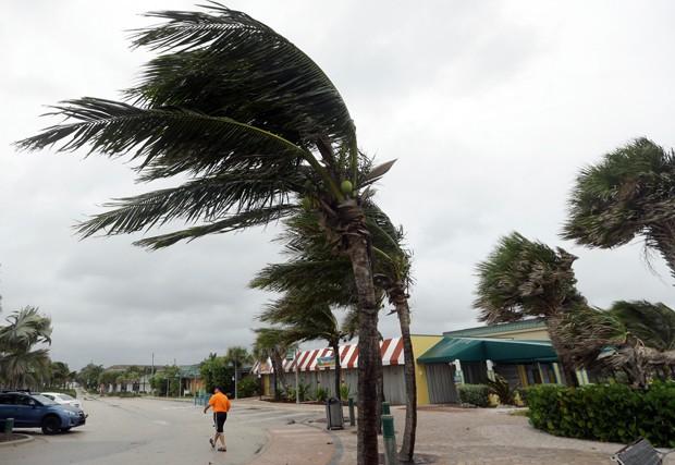 Ventos associados ao furacão Matthew curvam palmeira em Vero Beach, na Flórida (Foto: Lynne Sladky/AP)