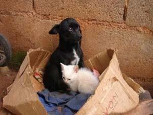 Cadela adota filhote de gato em Pains, MG (Foto: Carina Pereira)