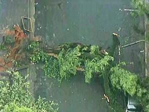 Árvore caiu na Rua Itacolomi nesta quinta-feira  (Foto: Reprodução/TV Globo)