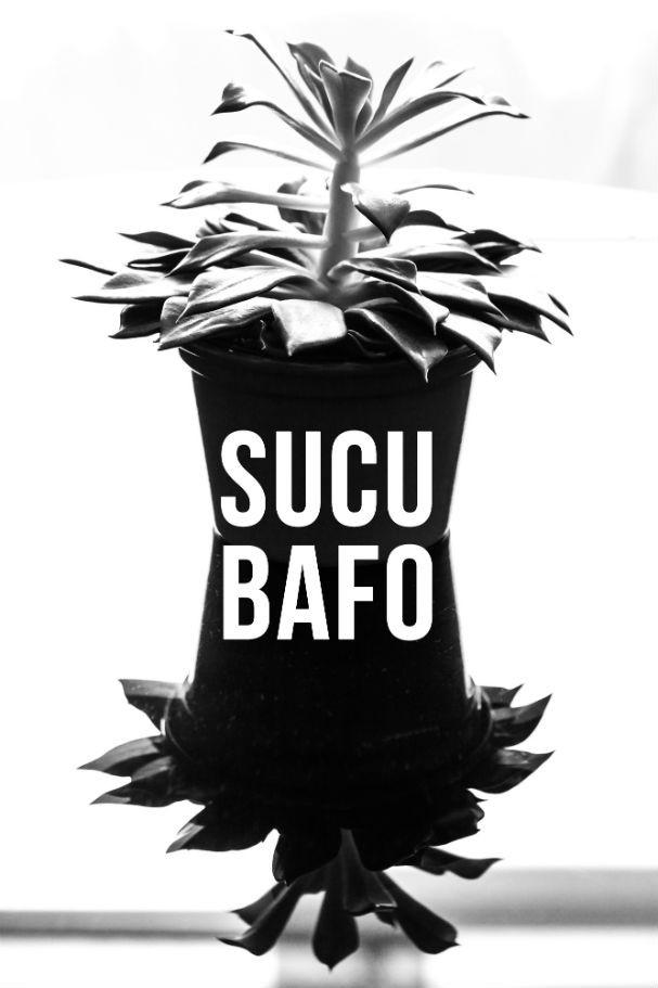 """Essa é a """"sucu bafo"""", pois até uma suculenta pode ter uma imagem impactante!  (Foto: Flavio Teperman)"""