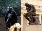 Gorila é fotografado em pose que lembra escultura o Pensador