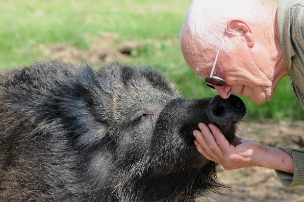 O animal já está com 86 quilos e demonstra afeição para com os donos, que vivem em Saint-Paul-d'Espis, no sudoeste da França. (Foto: Remy Gabalda/AFP)