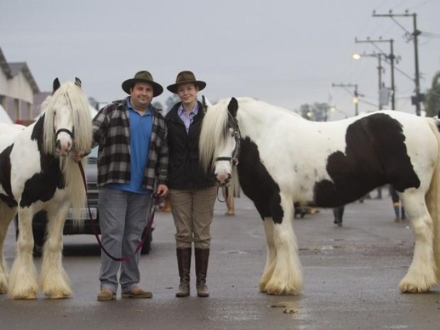 Cavalo Cigano (Foto: Alexandro Auler/Divulgação Expointer)