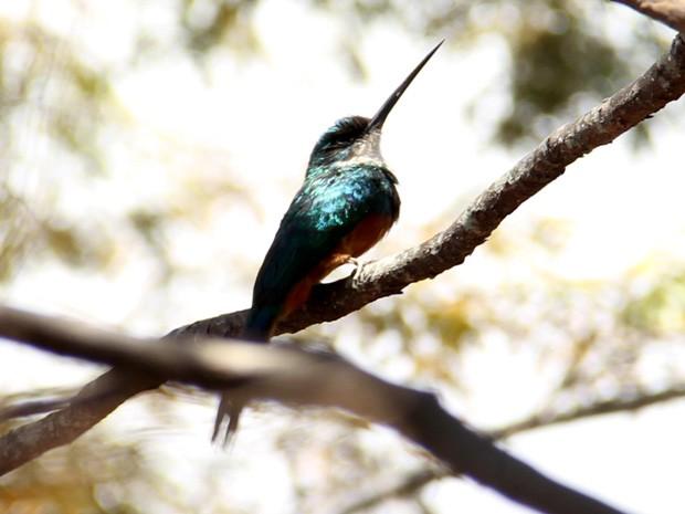 Aves incêndio (Foto: Vanderlei Santos/Cordeiros em Foco)