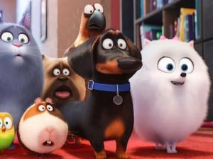 Cena da animação 'Pets – A Vida Secreta dos Bichos' (Foto: Divulgação)