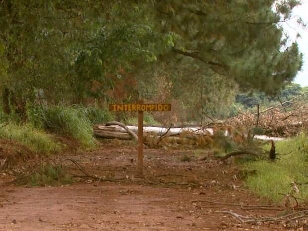Placa e galhos de eucalipto sinalizam interdição de estrada em Casa Branca (Foto: Oscar Herculano Jr/EPTV)