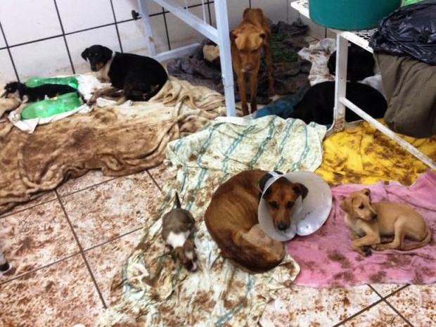 Filhotes de cães e gatos morreram afogados no canil (Foto: Andre Shimada / Arquivo Pessoal)