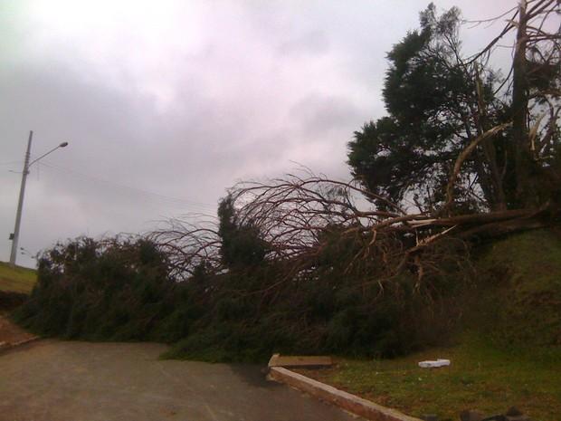 Árvores foram derrubadas durante a chuva de granizo (Foto: Reprodução RBS TV)
