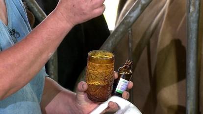 Uso de homeopatia em gado leiteiro é tema de reportagem do 'Globo Rural'