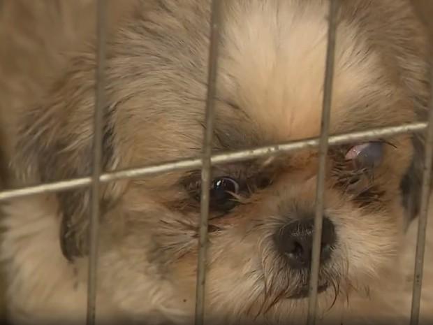 Cão cego de um olho encontrado em chácara em Santo Antônio da Posse (Foto: Reprodução EPTV)