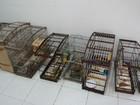 Fiscais apreendem 40 aves silvestres em situação irregular em Natal
