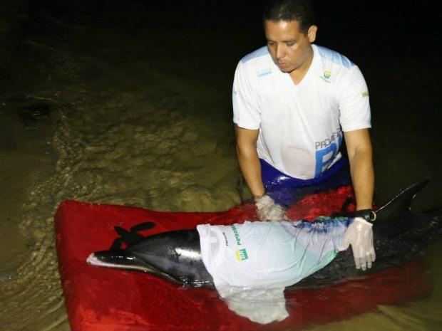 Animal recebe cuidado de técnicos de ONGs especialista em resgete de animais no litoral (Fot Projeto Biomade/Divulgação)