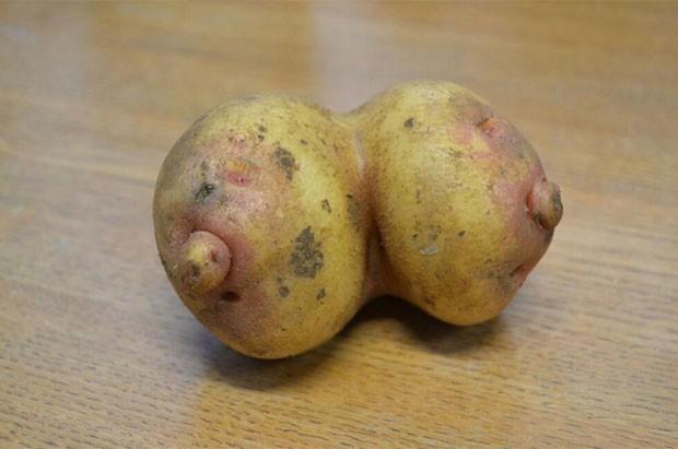 Kevin Stokes colheu duas batatas que cresceram grudadas e parecem com um par de seios (Foto: Reprodução/Twitter/Farndon Fields Farm)