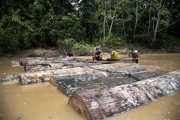 Toras de madeira cortadas recentemente por desmatadores são vistas próximo à comunidade indígena (Foto: Martin Mejia/AP)