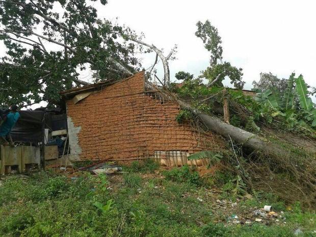 Árvore cai em cima de três casas e deixa homem ferido em Itaporanga (Foto: Tenente Caldas / CBMSE)