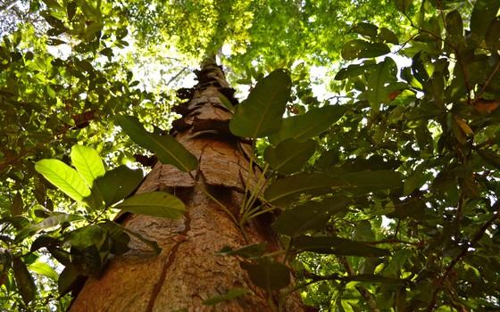 Projeto de Redução de Emissões de Desmatamento (Redd) no Vale do Jari, Amapá (Foto: Angelim Rajado/Divulgação)