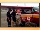Cães catarinenses percorrem 100 km em busca de vítimas em Mariana (MG)