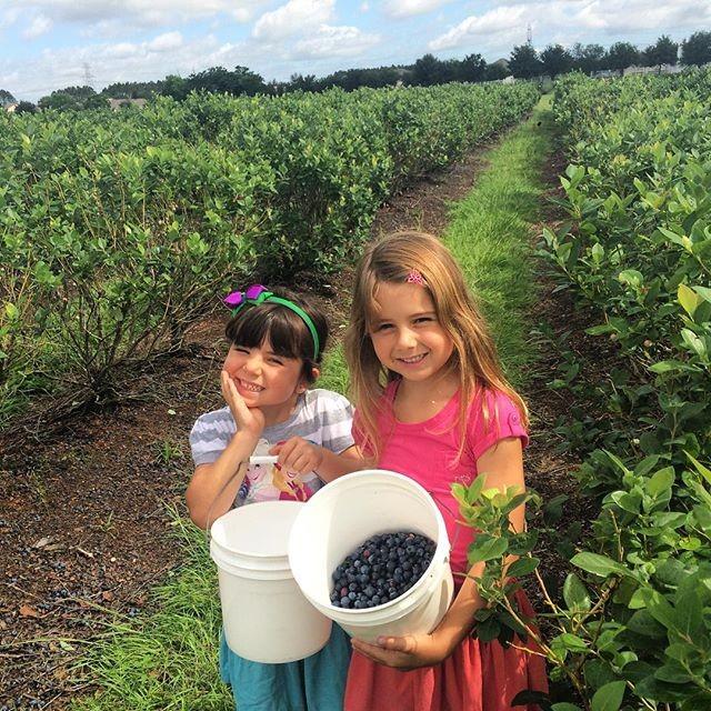Nina e Maitê colhem blueberries (Foto: Reprodução/ Instagram)