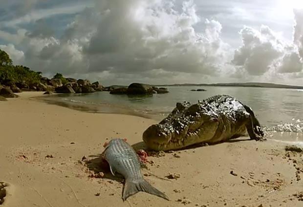 Cinegrafista atraiu o crocodilo faminto com pedaços de carne. (Foto: Reprodução)