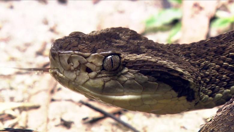 cobra (Foto: Reprodução/TV Globo)