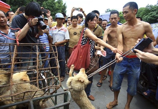 Yulin China  city pictures gallery : ... festival de culinária canina de Yulin, na China Foto: AP Photo