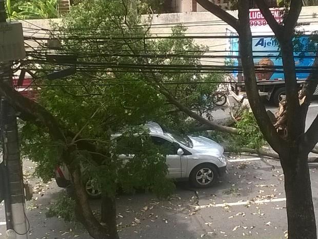 A árvore caiu em cima de uma árvore na Enseada do Suá (Foto: Sérgio Castro/ VC no ESTV)